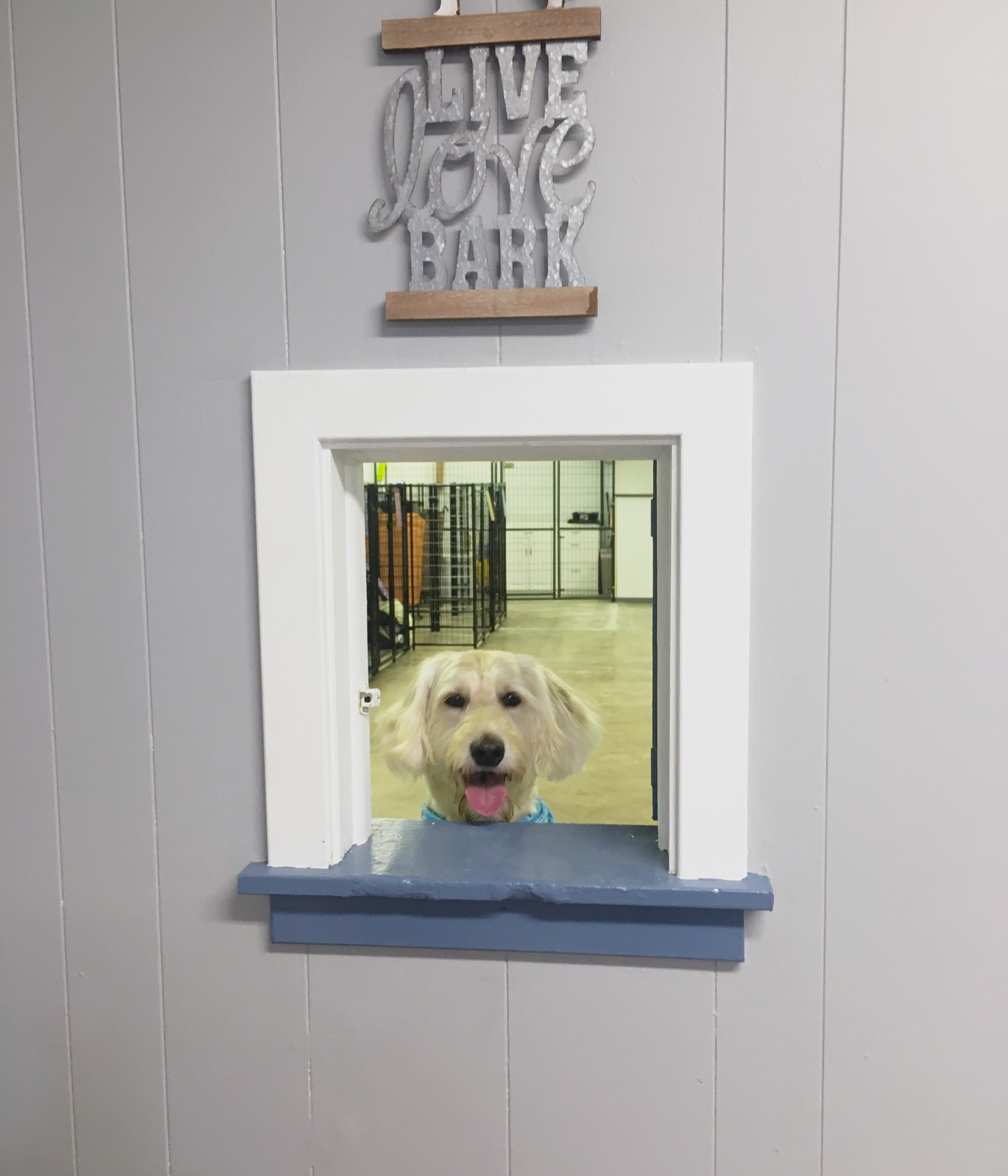 Dog Day Care | Miss Drew's Doggy Daycare Spring City